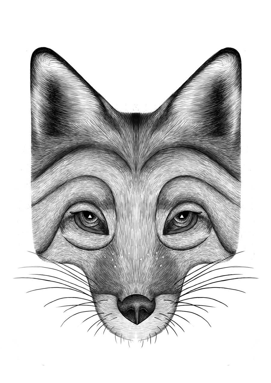 quillet逼真的动物肖像画作品