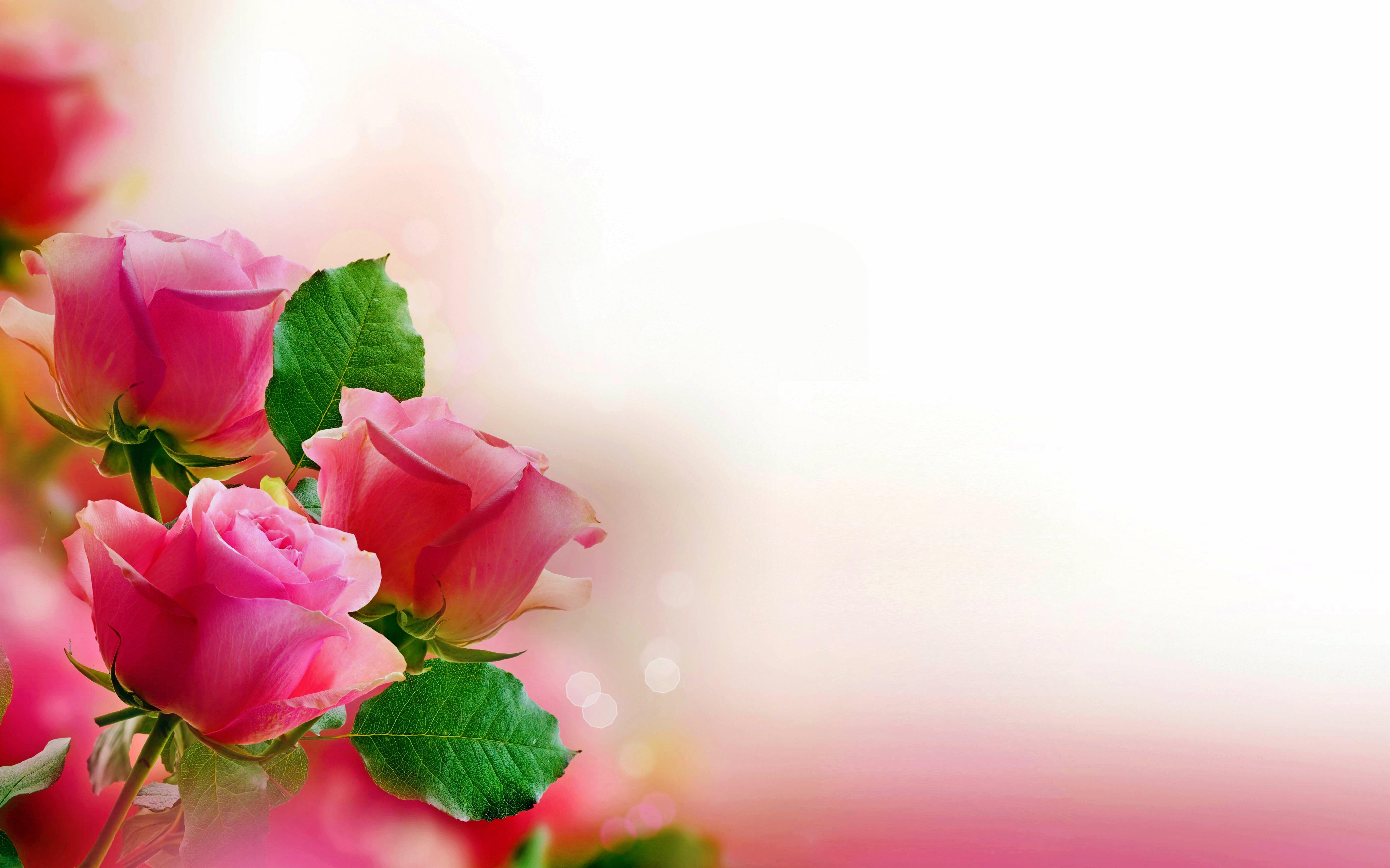 30个玫瑰花桌面壁纸图片