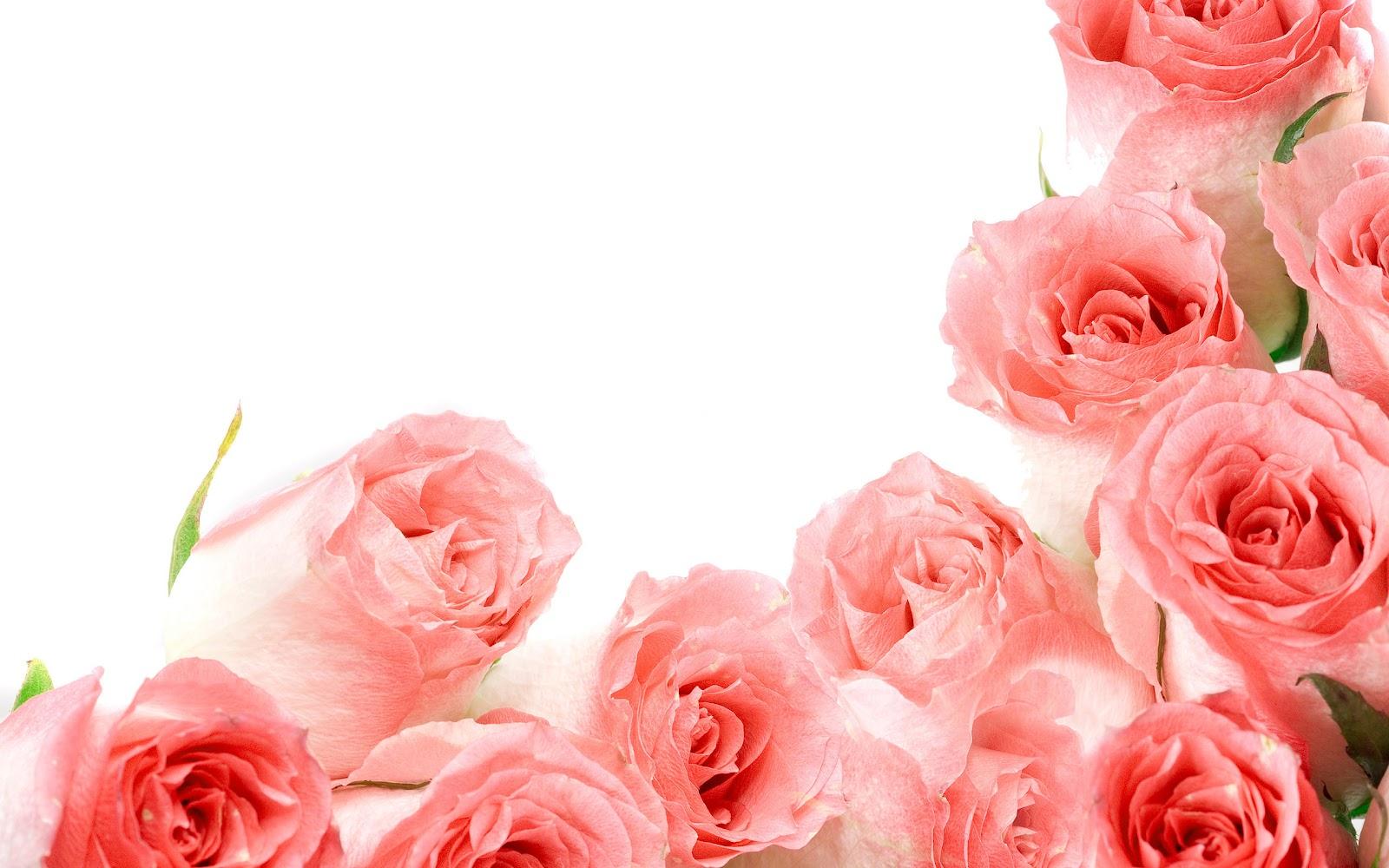 本地资讯_30个玫瑰花桌面壁纸 - 设计之家