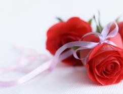 30个玫瑰花桌面壁纸