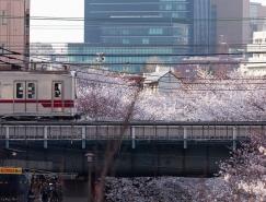 東京美麗的櫻花攝影欣賞
