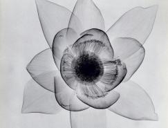 X射線下的花卉攝影