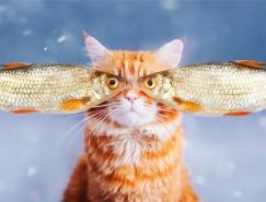 喵星人的奇幻世界:Kristina Makeeva打造可爱猫咪摄影