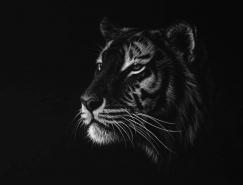Richard Symonds野生动物黑白肖像画作品