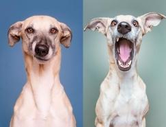 Elke Vogelsang狗狗肖像摄影