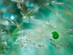 Magda Wasiczek昆虫和花朵微距摄影