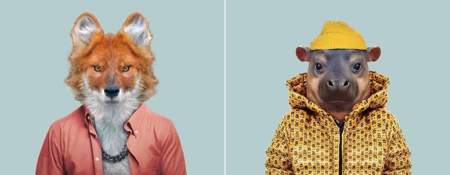 这些动物穿上衣服的模样非常有趣