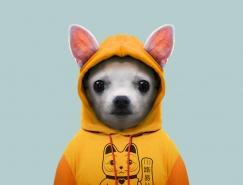 当动物也变得衣冠楚楚:Yago Partal动物肖像摄影