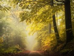Heiko Gerlicher美麗的森林攝影欣賞