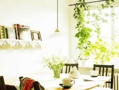 新装修的房子摆放什么植物可以去除异味和有害