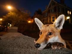 伦敦自然历史博物馆2016野生动物摄影大赛获奖作