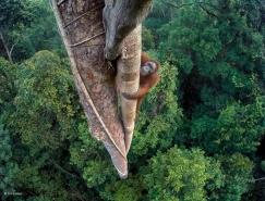 伦敦自然历史博物馆:2016年野生动物摄影大赛获