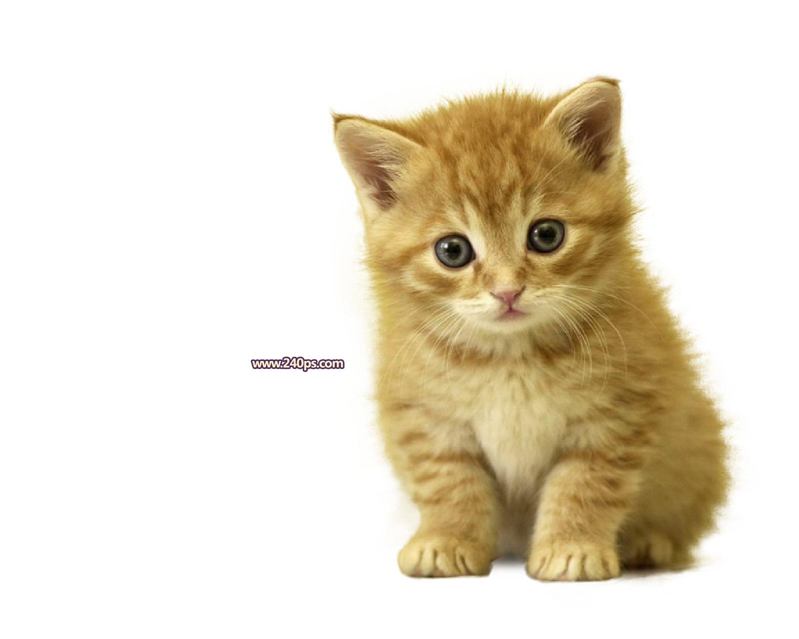 可爱猫咪白底图