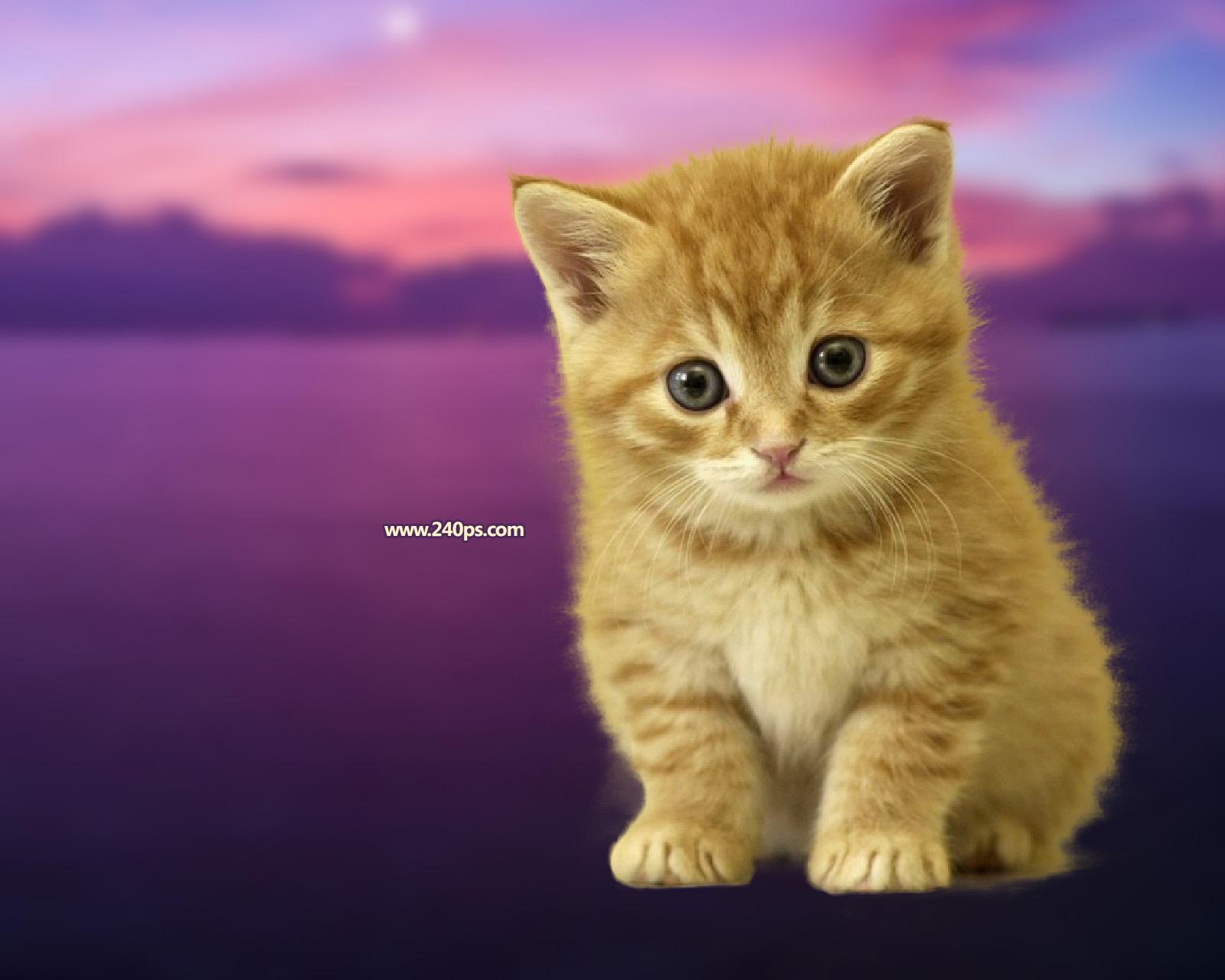 ps调整边缘抠出可爱的小猫