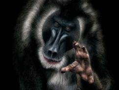 20個驚人的野生動物攝影作品