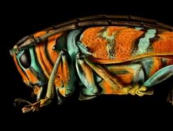 Levon Biss精细昆虫摄影欣赏