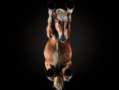 Andrius Burba:全新视角下的动物世界