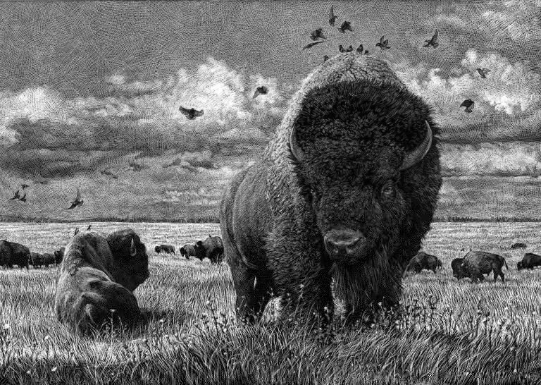 Ricardo Martinez动物黑白插画作品
